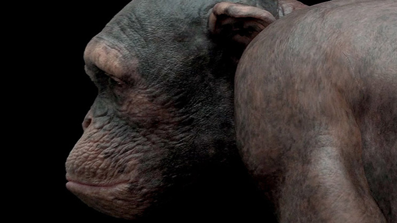 Developing a 100% CGI Chimp for PETA '98% Human'